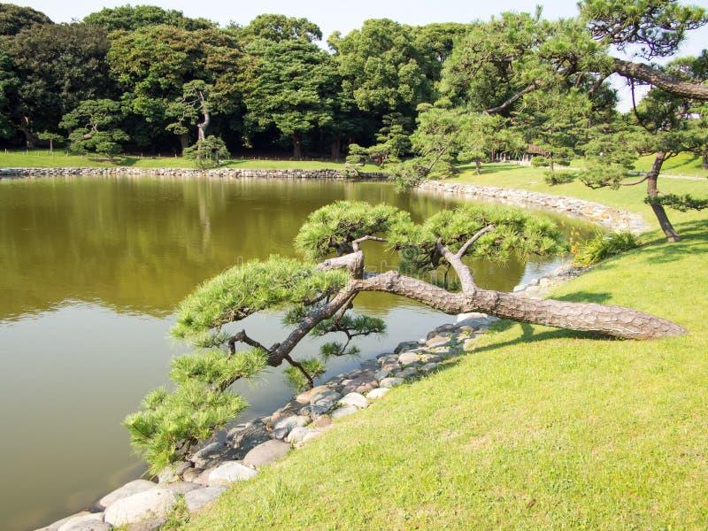 Beautiful Hama Rikyu Garden, Tokyo, Japan. Hama Rikyu 浜離宮, Hama Rikyū, is a large, attractive landscape garden in central Tokyo. Located royalty free stock photography