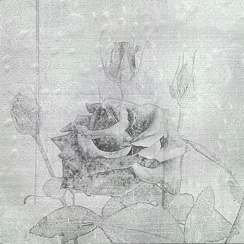 Beautiful hand drawn rose on the cement wall. Background for design vector illustration