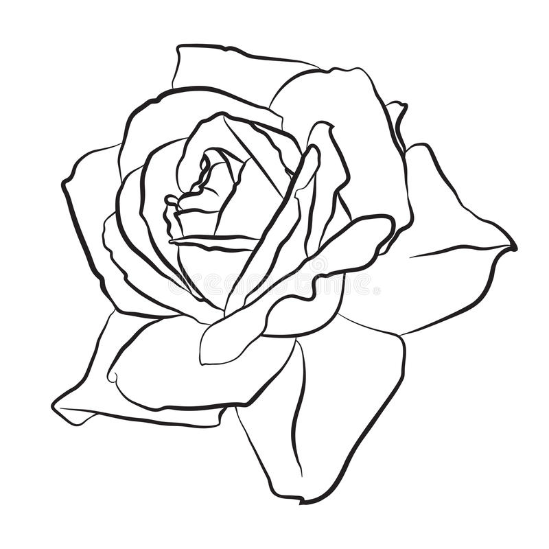 Free Beautiful Hand Drawn Sketch Rose, Isolated Black Contur On White Background. Botanical Silhouette Of Flower Royalty Free Stock Photography - 92721117