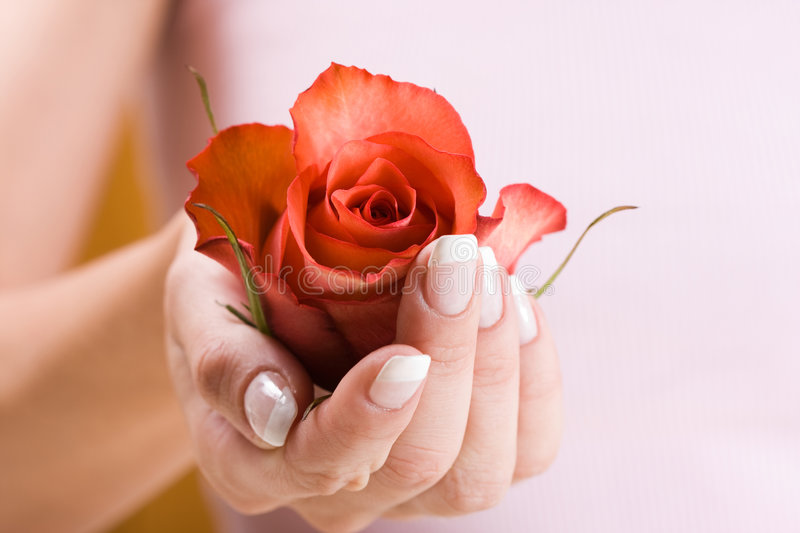 Beautiful hand with rose stock images