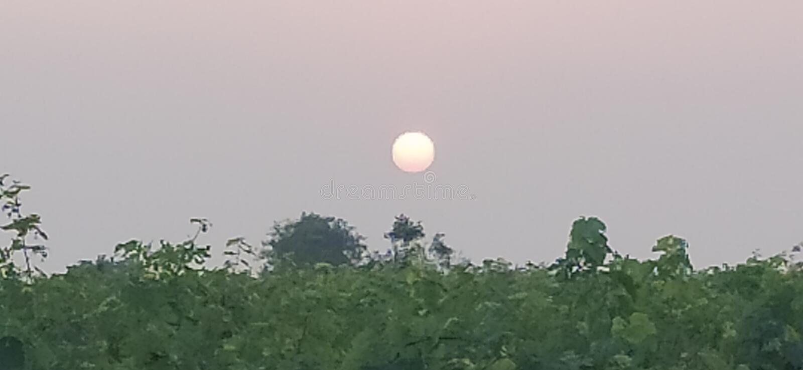 A beautiful hazy sunset in grapes garden stock images