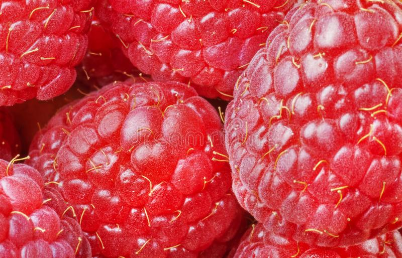 Raspberries close up. Beautiful heap of ripe raspberries , small red drupes close up ,studio shot stock images