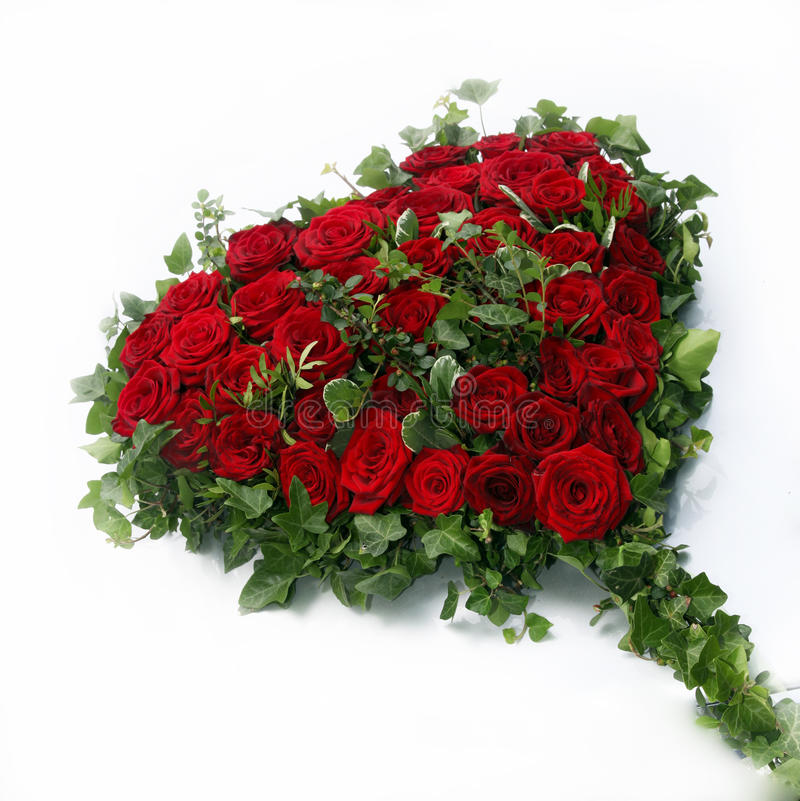 Beautiful heart of red roses. Surrounded by ivy leaves on a white background - qadratisch - Copy Space royalty free stock photos