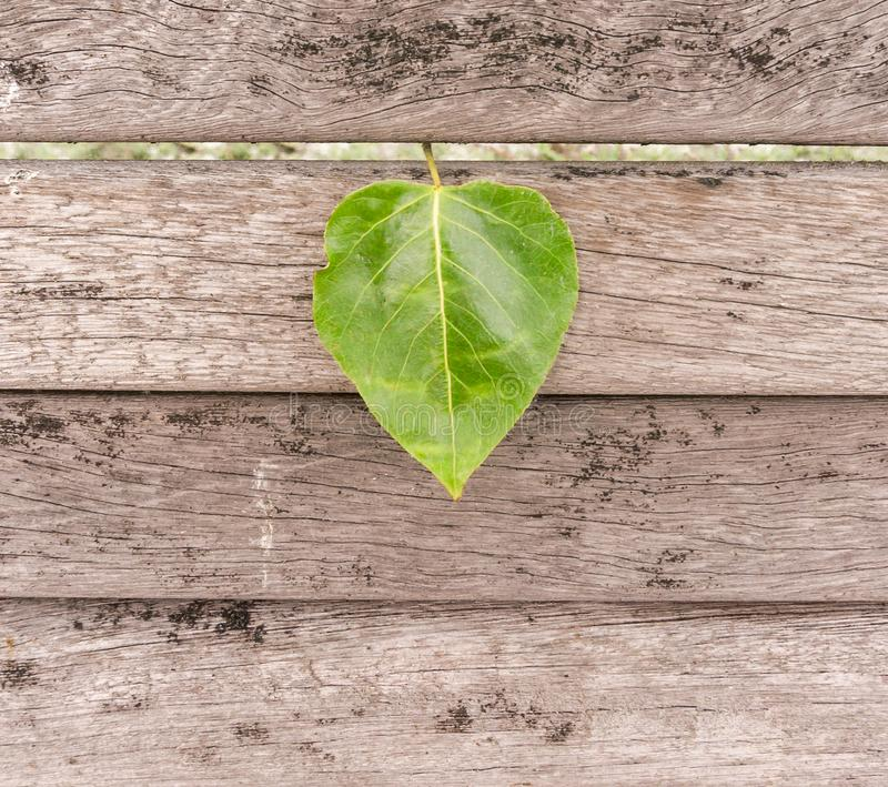 Heart shaped leaf on wood royalty free stock photography