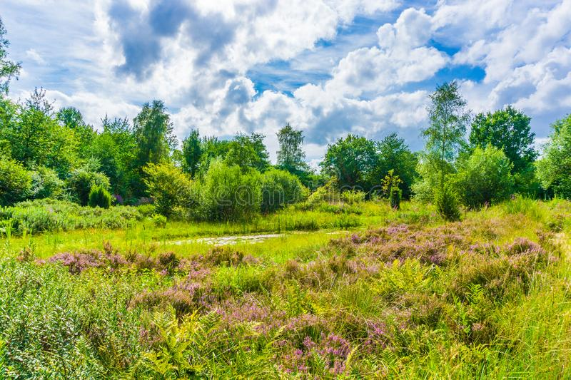 Beautiful heather meadow nature landscape with blue sky and clouds royalty free stock photo