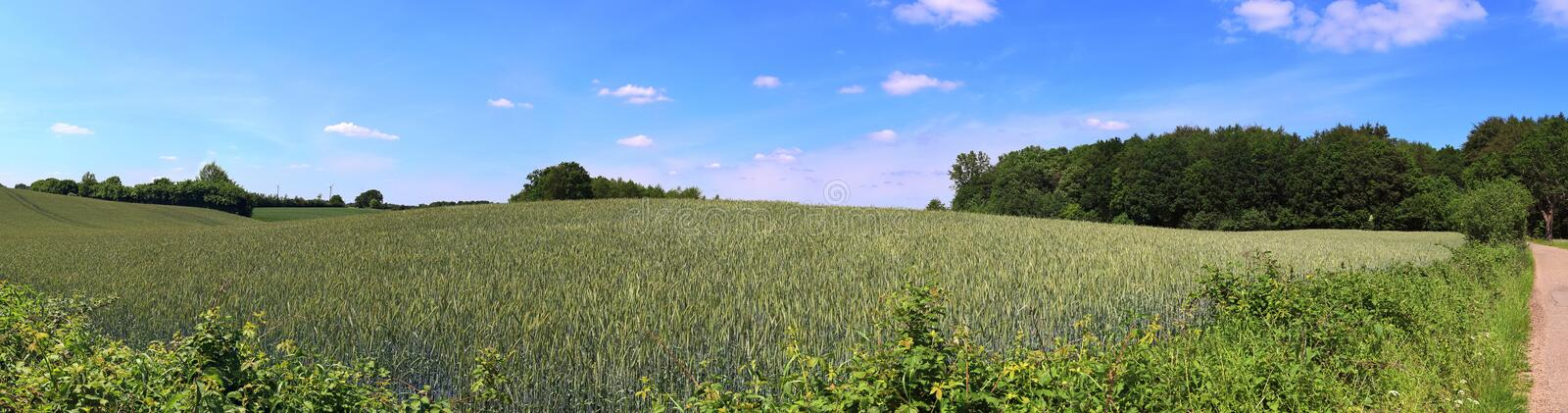 Beautiful high resolution summer landscape with fields, green grass and a stunning summer sky taken in northern germany. Beautiful high resolution summer royalty free stock images