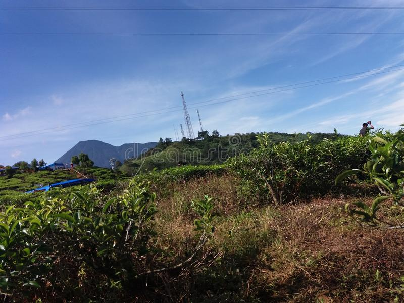 Scenery of tea plantation in Bogor, Indonesia. Beautiful highland landscape of fresh tropical tea plantation with blue sky in Bogor, West Java, Indonesia royalty free stock photography
