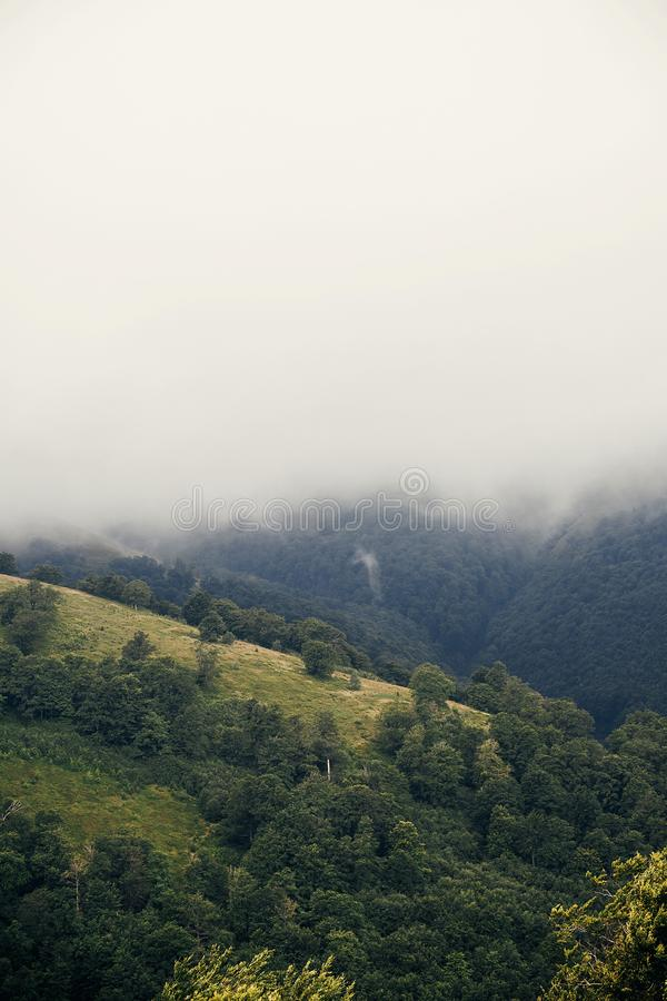Beautiful hill with trees in misty fog in mountains. vertical sc stock photos