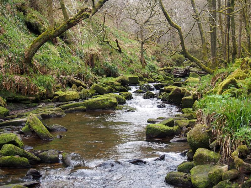 A beautiful hillside stream running though moss covered rocks and boulders with trees in spring trees an early spring forest stock photography