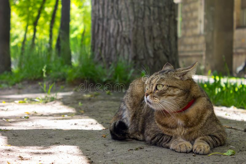 A beautiful home cat lies on the ground and rests under a tree stock image