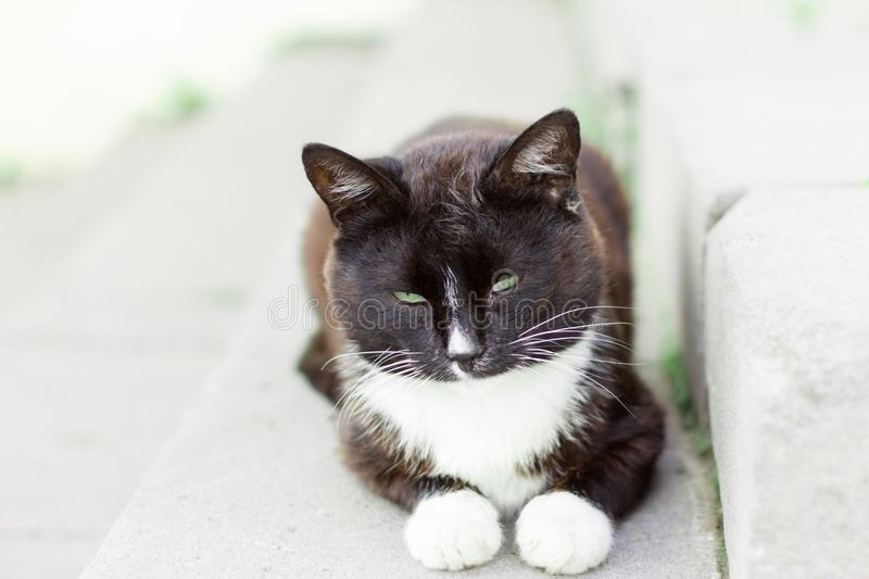 Beautiful homeless dirty cat sitting on the porch stock photo