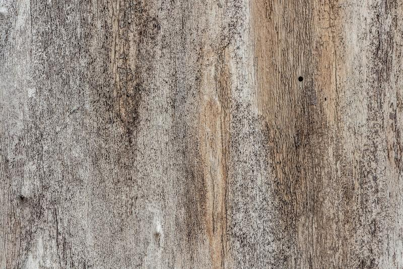 A beautiful horizontal texture of gray old poplar tree with knots and cracks without bark royalty free stock images