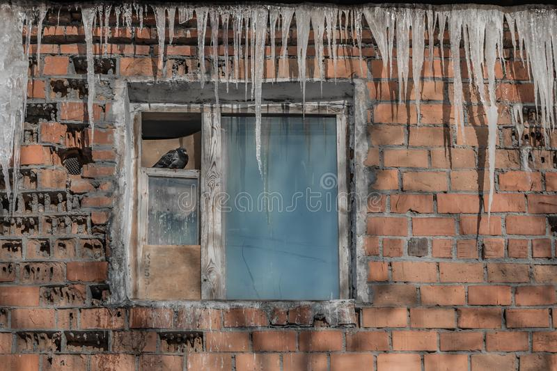 A beautiful horizontal texture of part of an old crashed brick wall in orange hue with an old window with a pigeon and a group of. Sharp transparent white royalty free stock photo