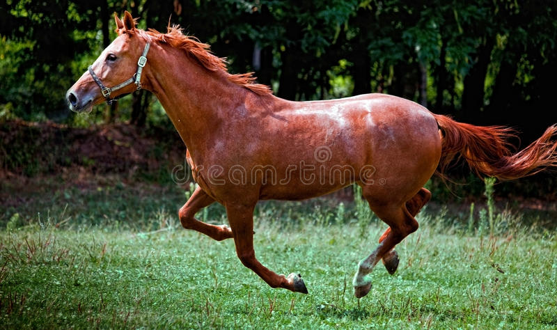Download Beautiful Horse stock photo. Image of equine, tree, outside - 10726786