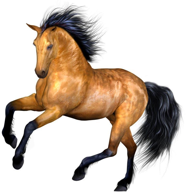 Free Beautiful Horse Stock Image - 8961691