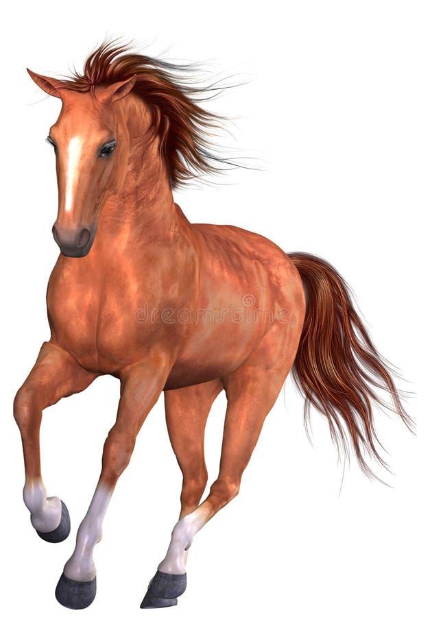Free Beautiful Horse Stock Images - 8961864
