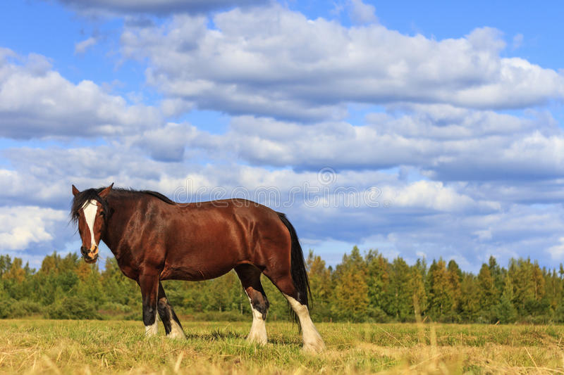 Beautiful horse amongst scenery royalty free stock image