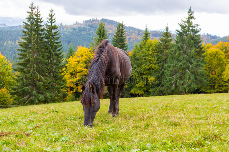 Beautiful horse grazing in an alpine meadow stock image