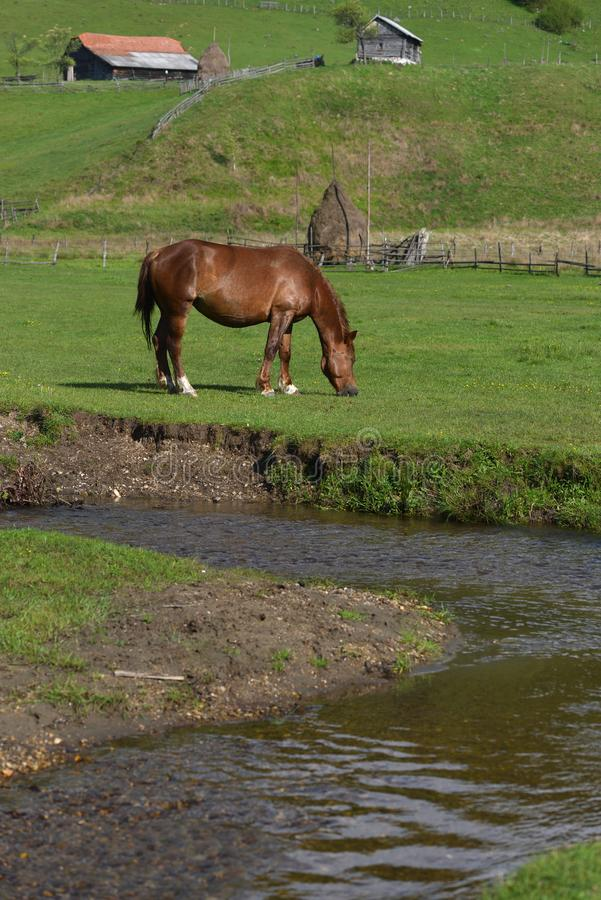 Beautiful horse on a green grass field near mountain water stream stock images