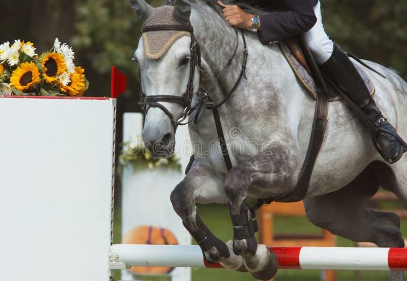 Beautiful horse jumping royalty free stock photos