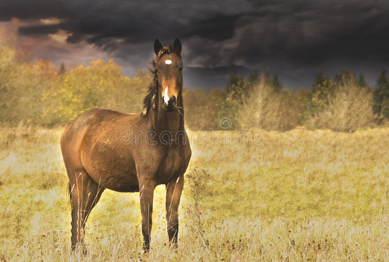 Download Beautiful horse stock photo. Image of looking, animal - 84433204
