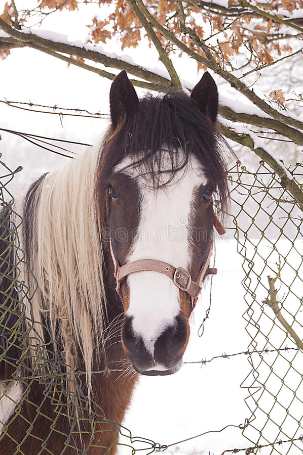 Download Beautiful horse stock photo. Image of nature, horse, hoofed - 31350484