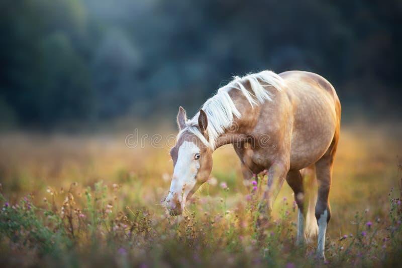 Beautiful horse on pasture royalty free stock photos