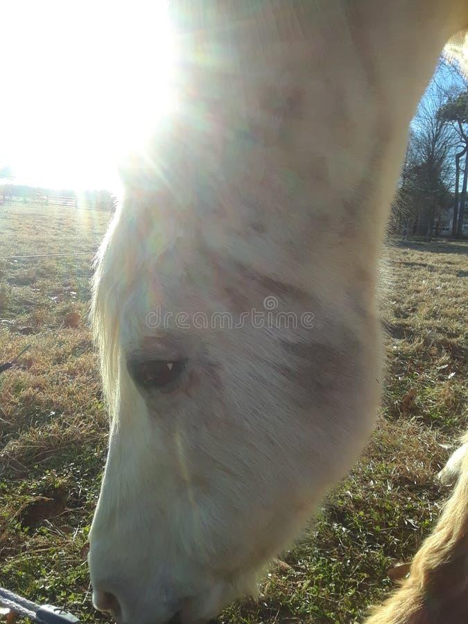 Sunset horse stock image