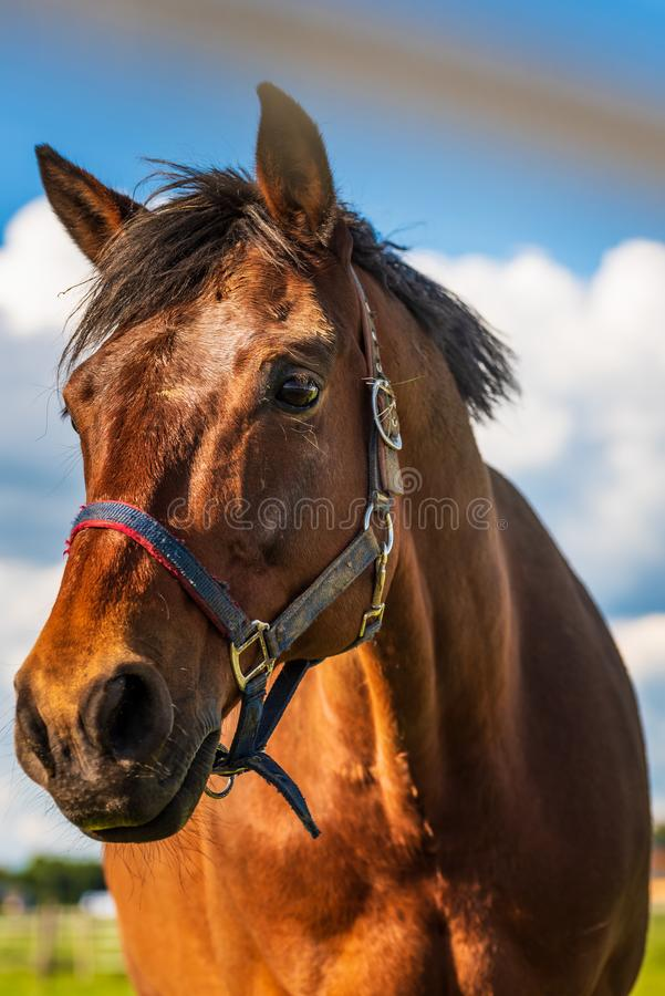 Beautiful horse portrait in summer sun. Outdoors royalty free stock photography