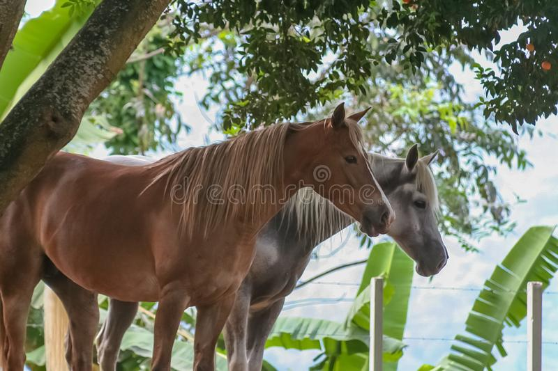 Beautiful horse in a ranch stock photos
