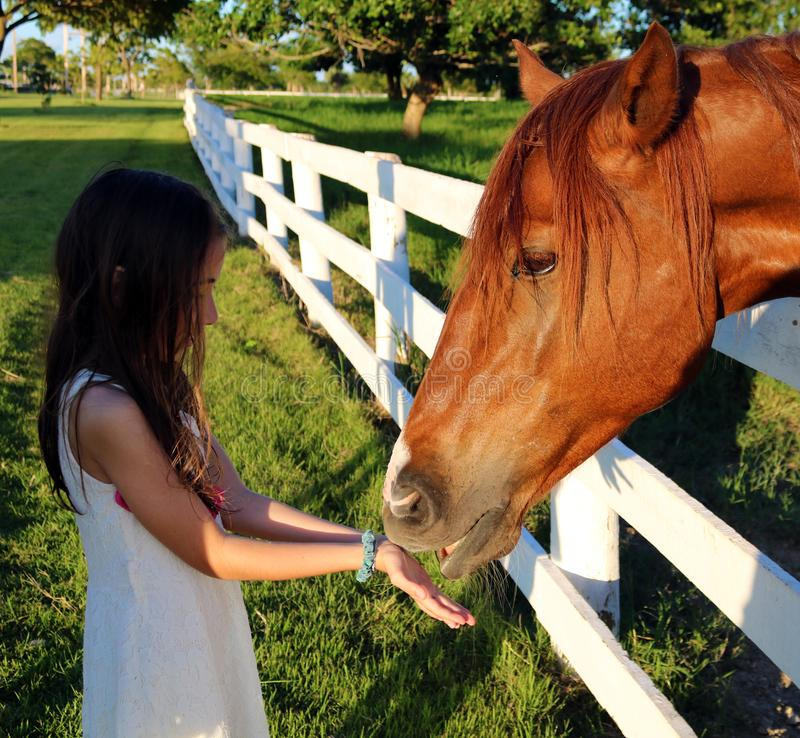 Beautiful horse long hair with little girl royalty free stock photo