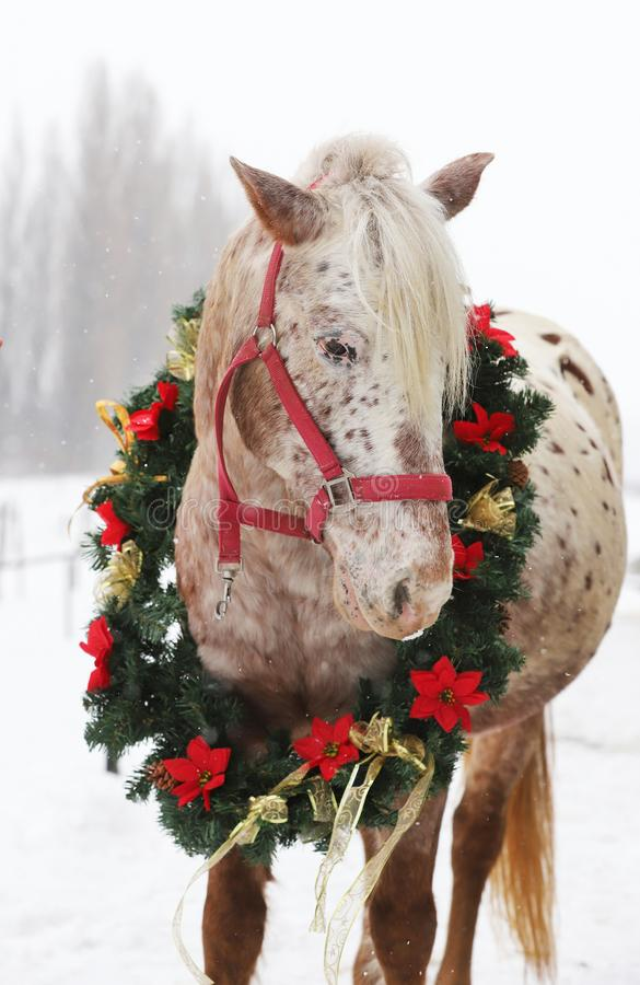 Beautiful horse wearing on her neck a fantastic christmas garland when snowing again royalty free stock images