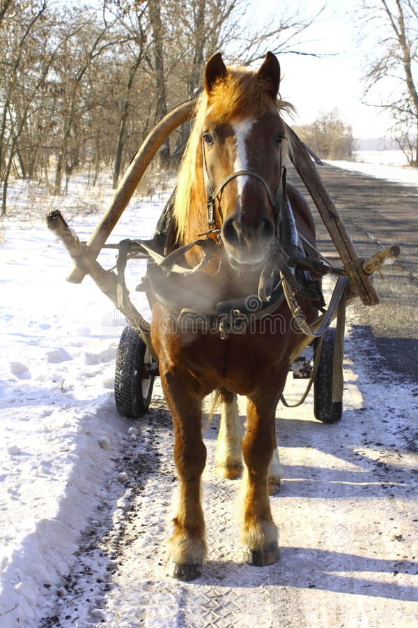 Download Beautiful Horse On Winter Road Stock Image - Image: 23078195