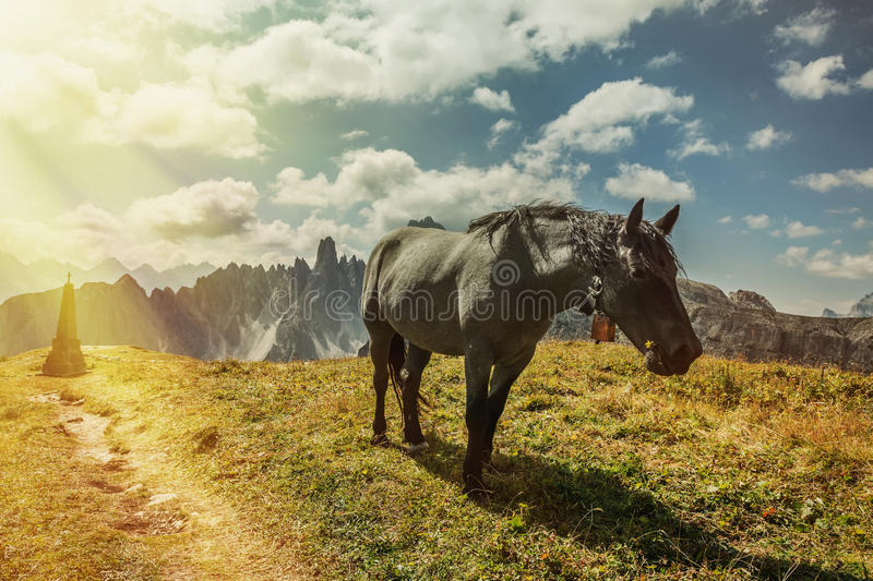 Beautiful horses in mountain landscape in the foreground, Dolomites, Italy stock images