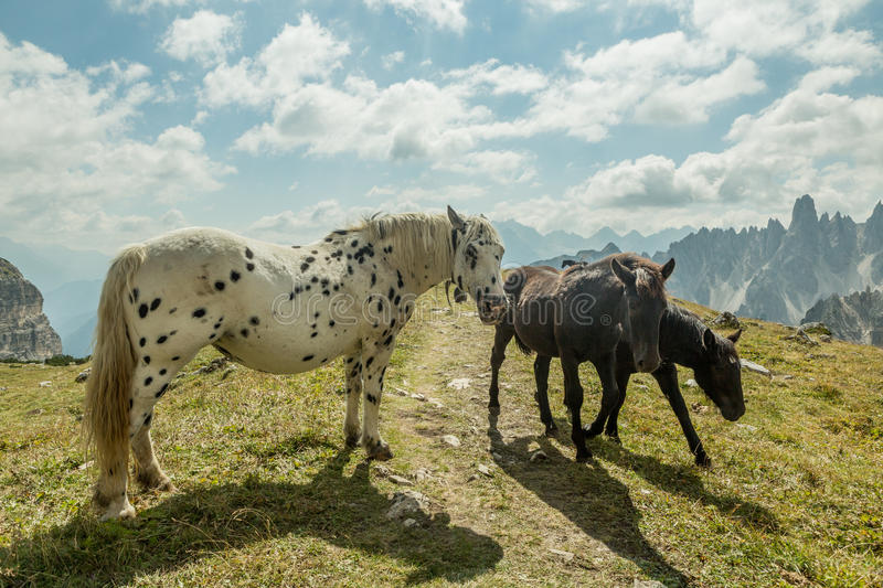 Beautiful horses in mountain landscape in the foreground, Dolomites, Italy stock photography