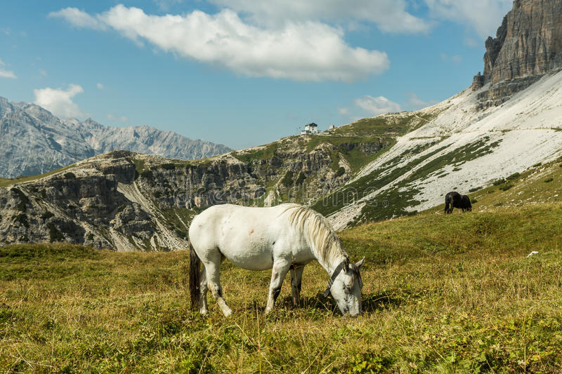 Beautiful horses in mountain landscape in the foreground, Dolomites, Italy. Sunny day. royalty free stock photo