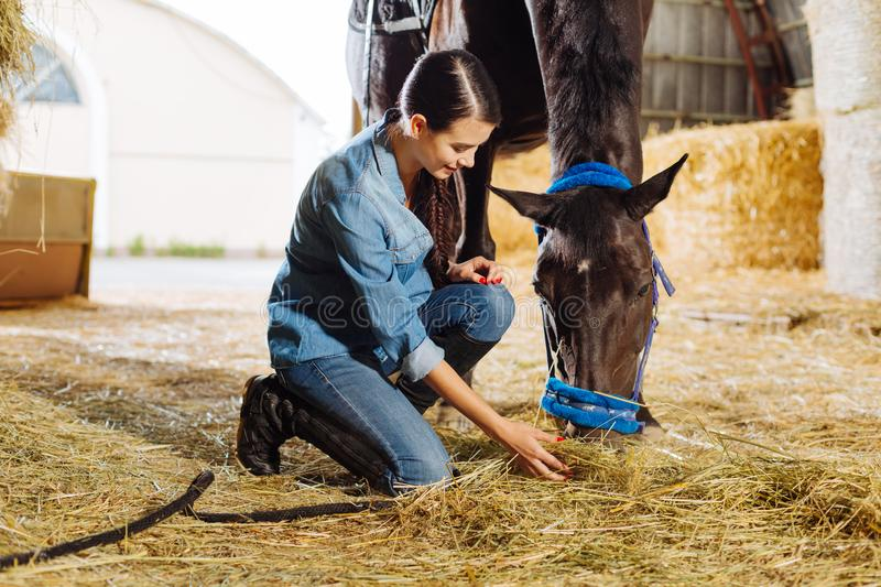 Beautiful horsewoman feeding brown horse with some straw stock images