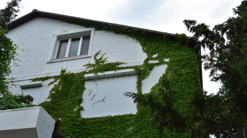 Beautiful house covered with greenery royalty free stock photography