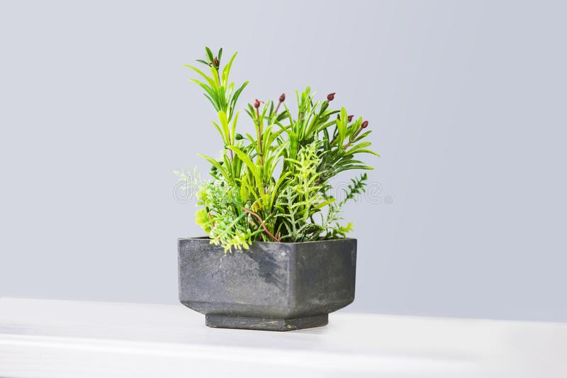 Beautiful houseplants in trendy geometric pots. Fake decorative succulent in a cement pot.  stock images