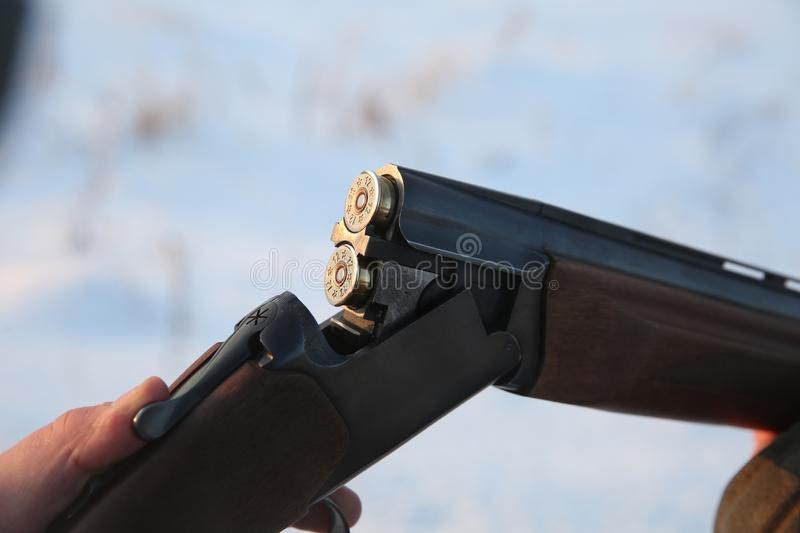 beautiful hunting cartridges shining in the sun close up. royalty free stock photos