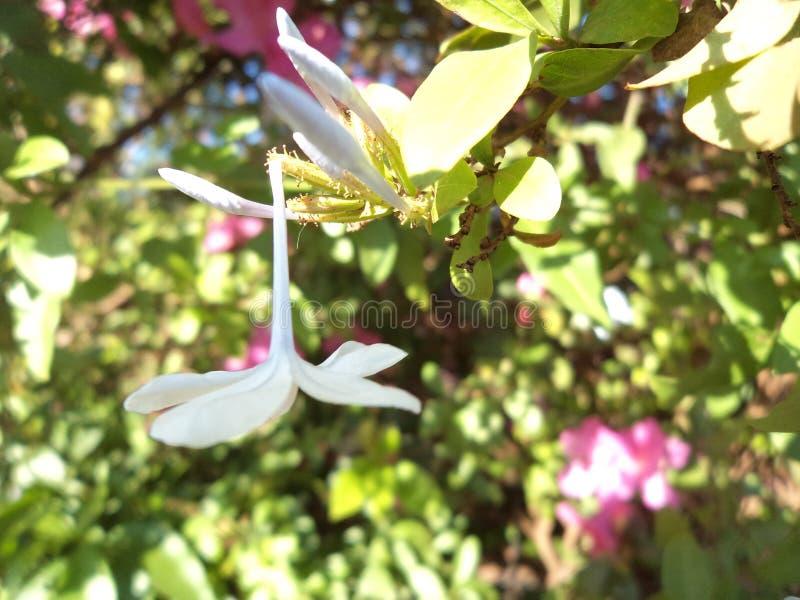 Broken flower royalty free stock photography