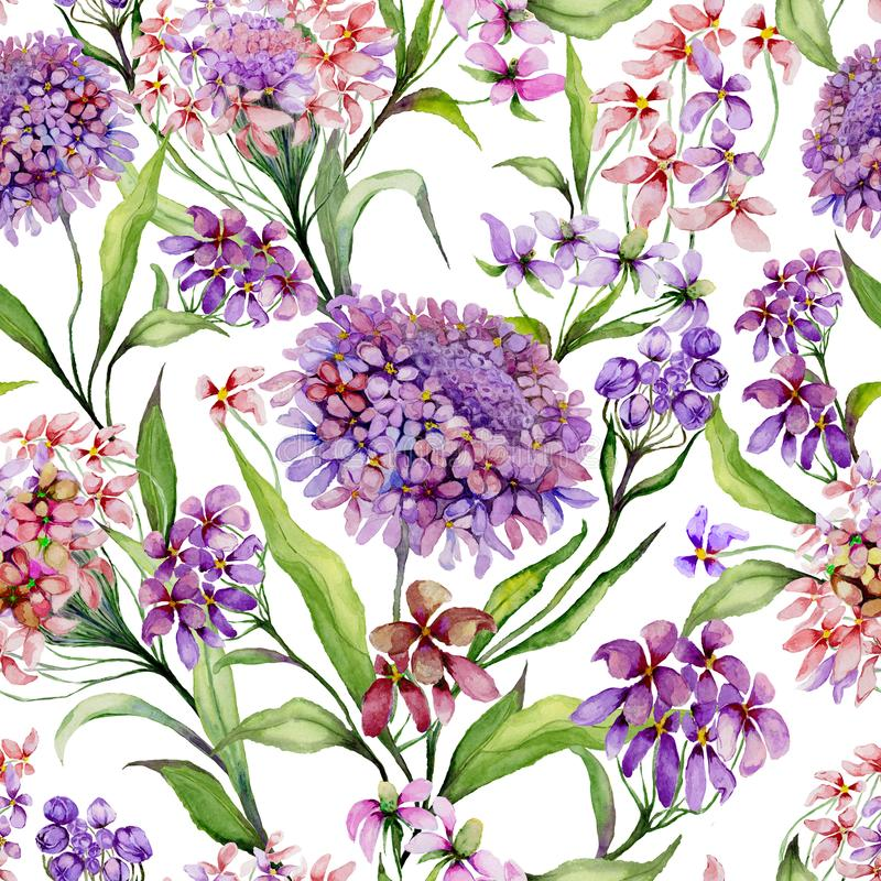 Beautiful iberis flowers with green leaves on white background. Seamless floral pattern. Watercolor painting. Hand painted illustration. Can be used for fabric royalty free illustration