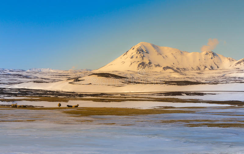 Beautiful Iceland winter season landscape. With clear blue sky background, natural landscpae background royalty free stock images