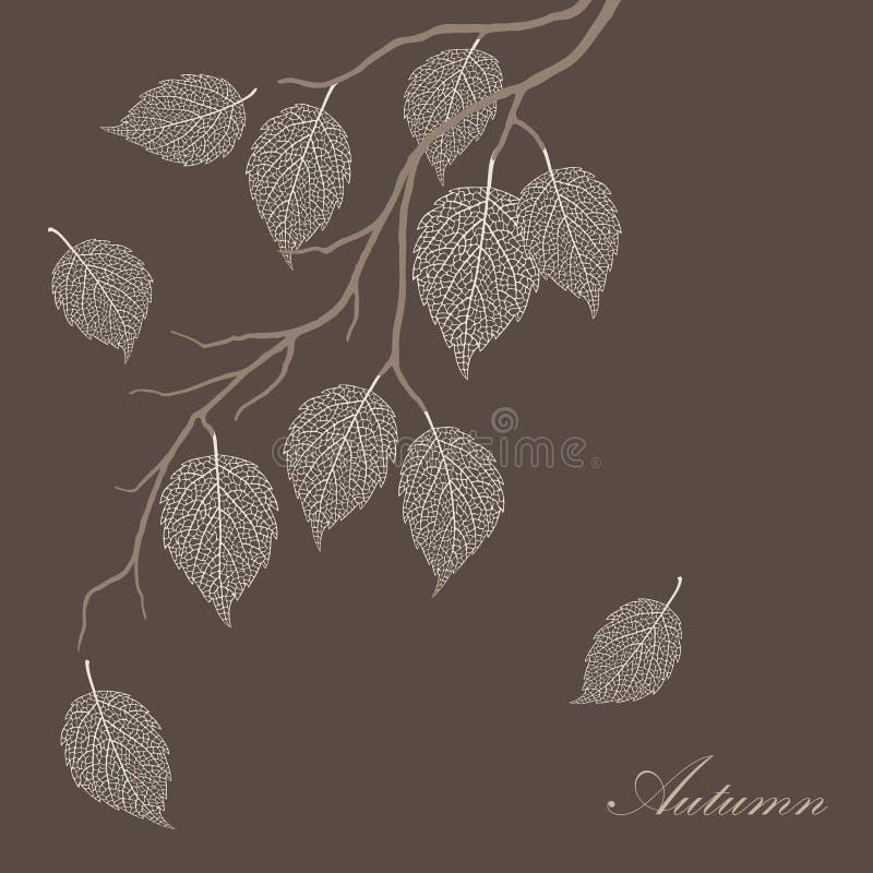 Beautiful illustration of transparent leaves vector illustration