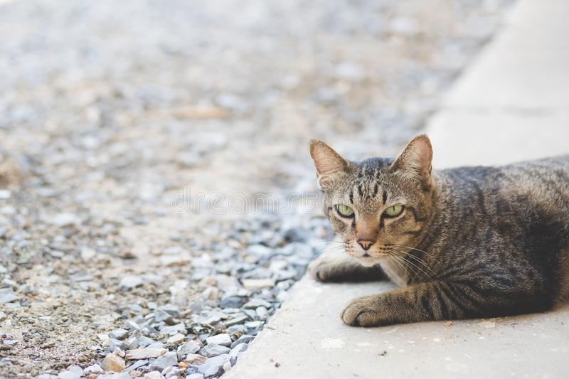 The beautiful image of a cute cat is lying on the cement floor in front of the house and looking at me. stock images