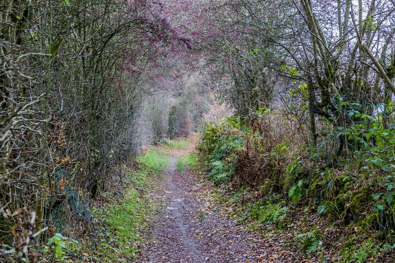 Beautiful image of a dirt road in the middle of the forest royalty free stock photography