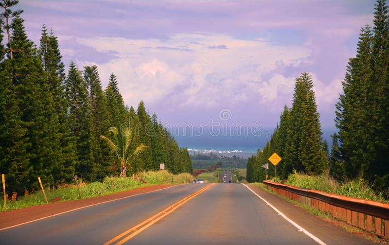 Beautiful image of road going straight through the trees to the pacific ocean royalty free stock photo