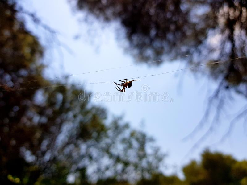 Beautiful image in which you can see a spider walking through the center of the image in a horizontal thread that holds it. Background, macro, nature, animal royalty free stock photos