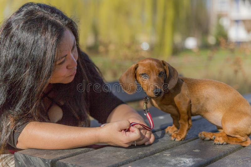 Beautiful image of a woman with long hair lovingly chatting with her puppy. Enjoying a wonderful and sunny day in the park, copy space stock images