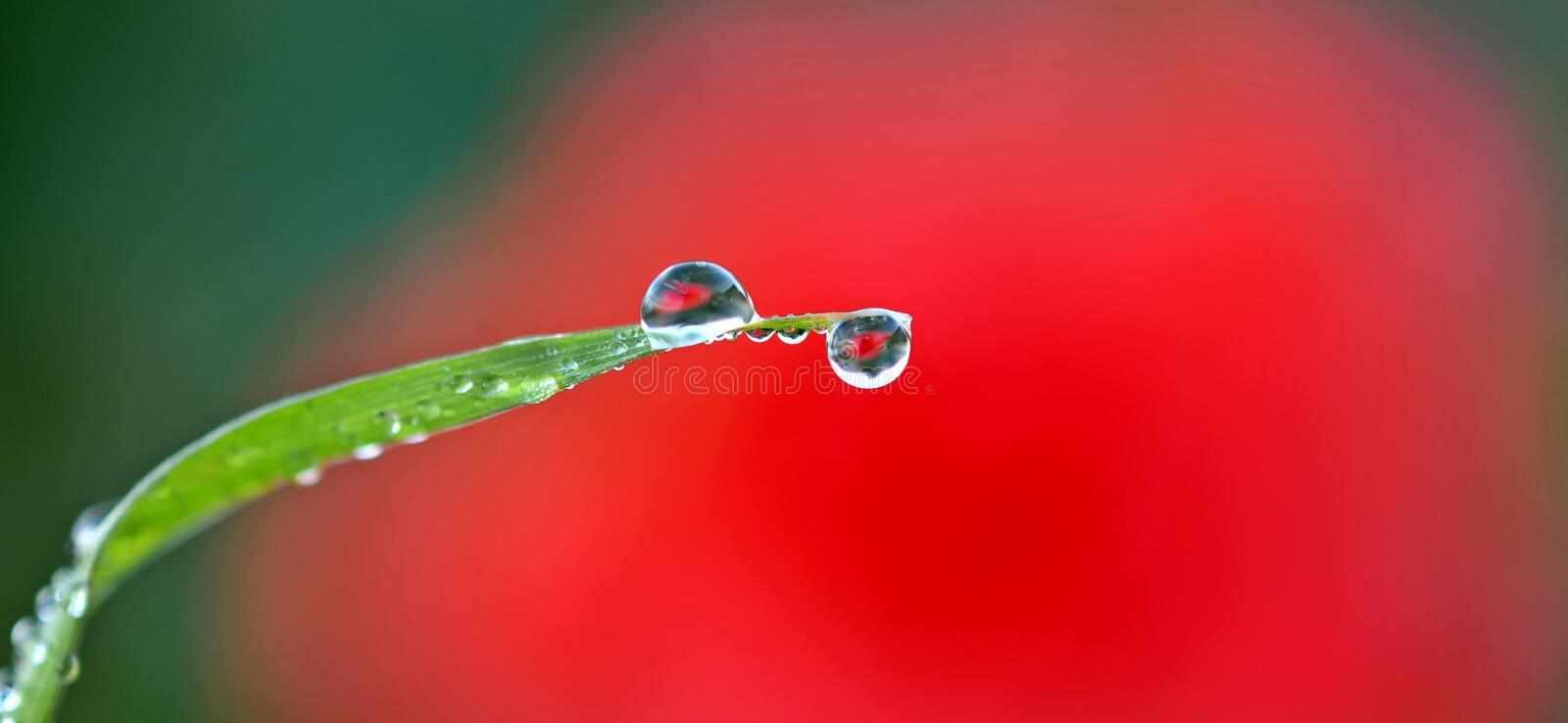 Beautiful images reflected by the drops of frost royalty free stock photography